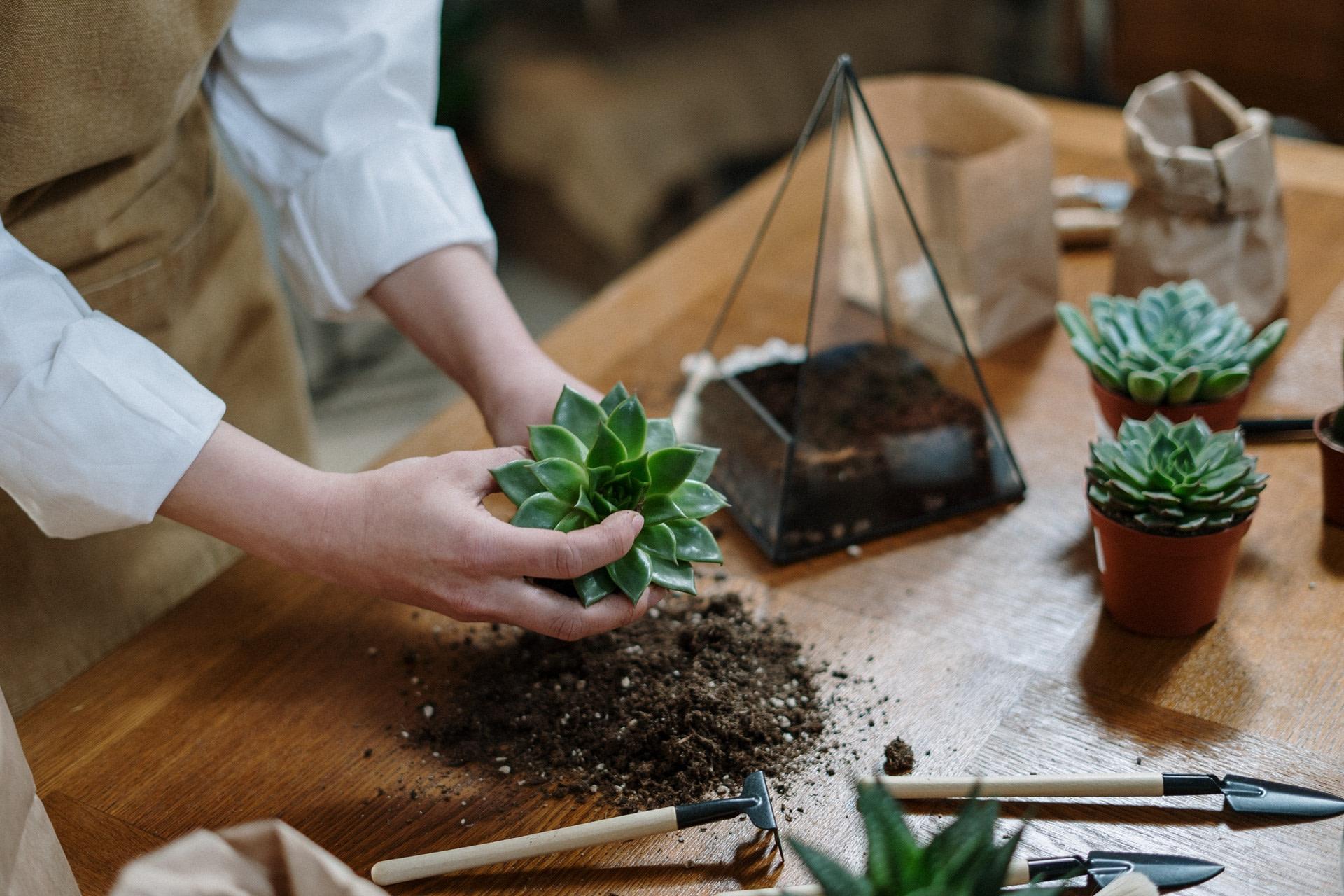How To Make Your Dream Garden?
